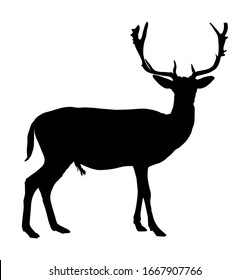 Deer vector silhouette illustration isolated on white background. Reindeer, proud Noble Deer male in forest or zoo. Powerful buck with huge neck and antlers standing. Silka deer.