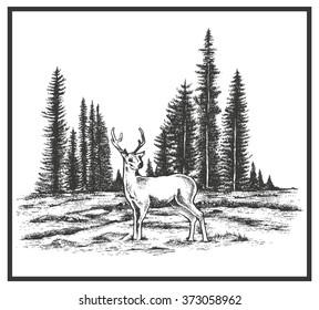 Deer with wild nature landscape hand drawn vector illustration