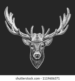 Deer. Wild west. Traditional american cowboy hat. Texas rodeo. Print for children, kids t-shirt. Image for emblem, badge, logo, patch.