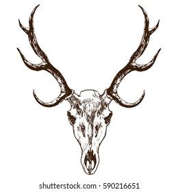 Deer's skull with horns hand drawn stock vector illustration. Animal death's head tattoo sketch