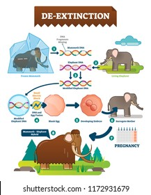 De-extinction infographic vector illustration. Detailed process explanation scheme with DNA modification, embryo, surrogate mother, pregnancy and mammoth - elephant hybrid.