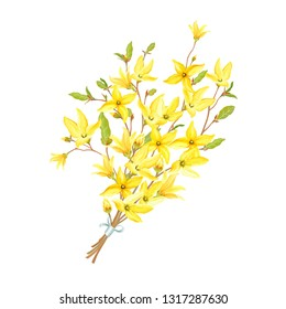 Delicate bouquet with blossoming yellow flowers and green leaves on branches Forsythia. Vector tender illustration in watercolor style.