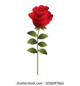 delicate flower rose stem leaves nature decoration