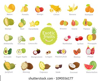 Delicious exotic fruits full of vitamins. Natural products of sweet and sour taste from hot countries all over world isolated vector illustrations.