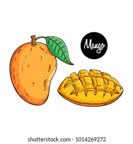 delicious fresh mango fruit with colored sketch or hand drawn style on white background