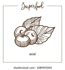 Delicious healthy ecotic acai monochrome superfood sepia sketch