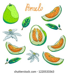 Delicious organic pomelo fruit for fresh juice. Slices of pomelo with peel and seeds, half and whole pomelo. Fragrant white flowers. Green leaves of a tree. Isolated illustration set