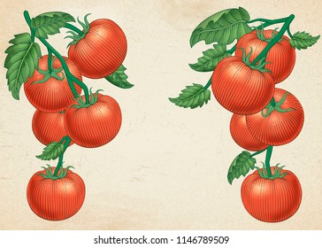 Delicious ripe tomatoes in engraving style on beige background