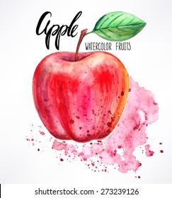 delicious ripe watercolor apple. hand-drawn illustration