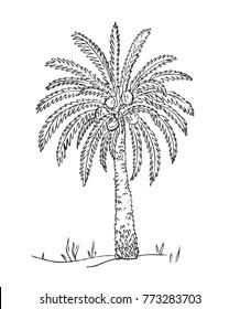 Desert. Date Fruit Palm on sand dunes. Vector hand drawn Palm Tree, sketch. Middle Eastern landscape.