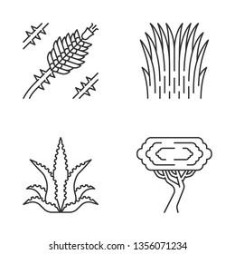 Desert plants linear icons set. Exotic flora. Ocotillo, Mexican thread grass, aloe vera, palo verde tree. Thin line contour symbols. Isolated vector outline illustrations. Editable stroke