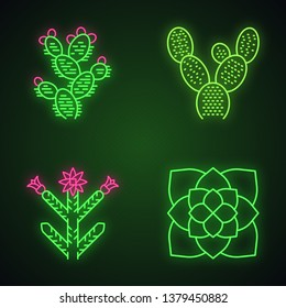 Desert plants neon light icons set. Exotic flora. Bunny ear cactus, prickly pear, cholla, ghost plant. American succulents. Glowing signs. Vector isolated illustrations