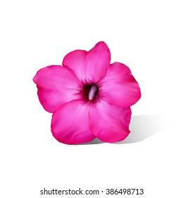 Desert rose flower isolated on white background,vector illustration