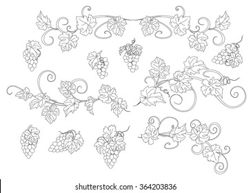 Design elements with bunches of grapes and vines in vintage style. Vector design elements in vintage style with vines.