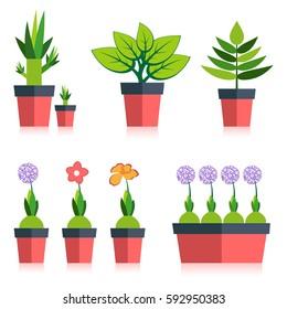 Design elements of trendy pot plants.