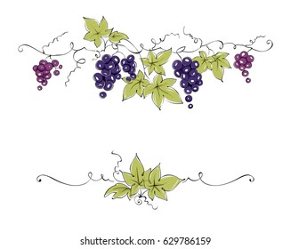 Design elements -- vine / Color vector illustration, dark red grapes -- drawing, sketch