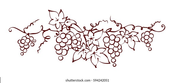 Design elements -- vine / Graphic vector illustration, grapes drawing sketch