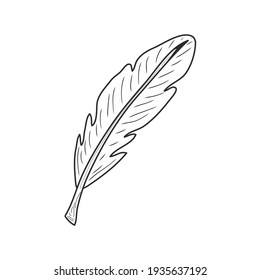 Design feather illustration. Idea for decors, logo, icon, gifts, ornaments, celebrations, invitation, greeting, meeting, holidays, nature themes. Ready-made artwork. Isolated vector.