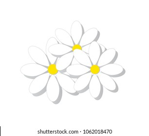 Design icons vector illustration of a flower (chamomile).
