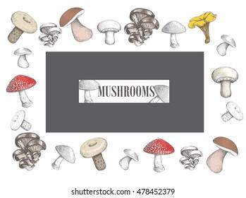 Design of mushrooms vector illustration. Set mushroom sketch vector.  mushroom  sketch style. Vector illustration for your design. vector mushroom , mushroom  EPS, vector mushroom