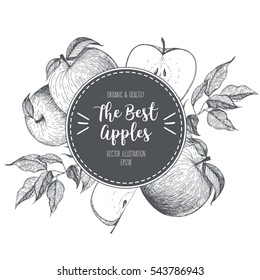 Design template for fruits market. Menu label with apples. Fresh apples hand-drawn. Vector illustration.