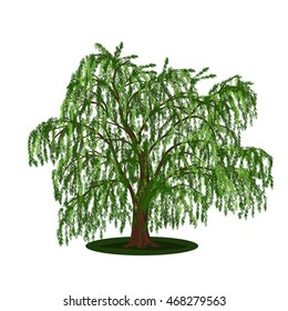 detached tree willow with leaves on a white background