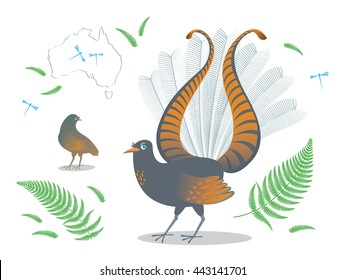 Detail drawn colored Australian bird Lyrebird performs ritual of courtship the female, tail in the shape of a lyre, isolated background, cartoon branches ferns, dragonflies and silhouette continent.