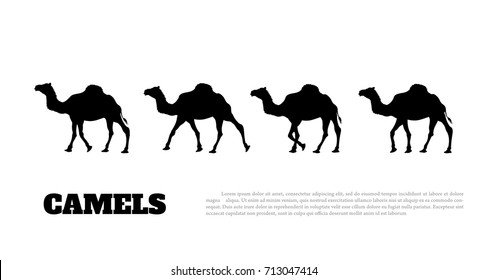 Detailed black silhouette of camel caravan on white background. African animals. Vector illustration