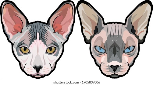 Detailed fashion vector portraits of Elegant Sphynx cat heads isolated
