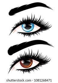 Detailed female eyes with long eyelashes illustration on white background.