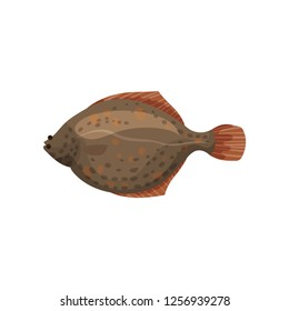 Detailed flat vector design of brown flounder fish, side view. Sea animal. Delicious marine product. Seafood theme