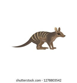 Detailed flat vector icon of Australian numbat. Wild animal with stripes on back. Marsupial anteater. Wildlife theme