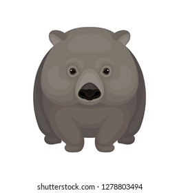 Detailed flat vector icon of cute gray wombat. Small Australian marsupial bear with short legs. Wildlife theme