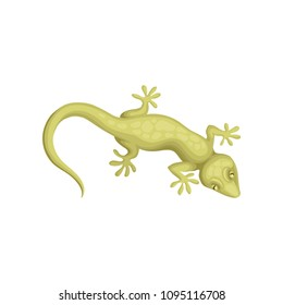 Detailed flat vector icon of small-spotted lizard. Reptile with long body and tail, four legs, movable eyelids and green scaly skin