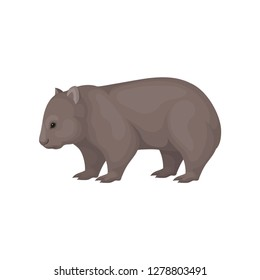 Detailed flat vector icon of wombat, side view. Australian marsupial animal with brown coat and short legs