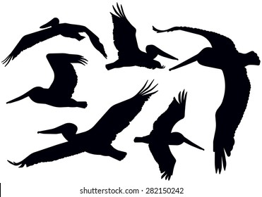 Detailed flying pelican silhouettes.
