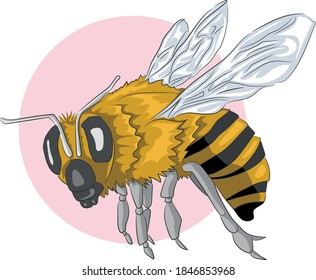 Detailed full body bee illustration with light and shadow in flight. Vector drawing