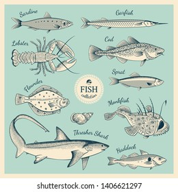 Detailed hand drawn fish illustrations in vintage engraving style. Collection of Sardine, Garfish, Lobster, Cod, Sprat, Flounder, Monkfish, Thresher Shark, Haddock. Vector Illustration.