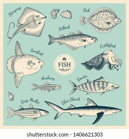 Detailed hand drawn fish illustrations in vintage engraving style. Collection of Stingray, Dab, Pollock, Sunfish, Cuttlefish,  Anchovy, Bonito, Grey Mullet, Blue Shark. Vector Illustration.