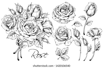 Detailed hand drawn flowers set - blooming roses, leaves and flower buds. Engraving, doodle style. Black and white colors. Isolated on white background. Vector illustration.