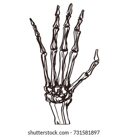 Detailed hand drawn illustration of bone skeleton human hand. Graphic engraving style art, horror theme. Isolated design element.