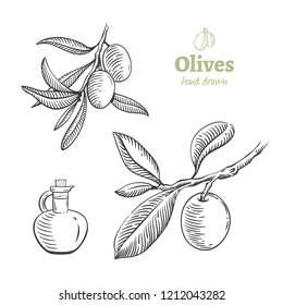 Detailed hand drawn vector black and white illustration of olives with leaves