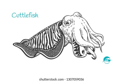 Detailed hand drawn vector black and white illustration of Cuttlefish