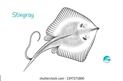 Detailed hand drawn vector black and white illustration of Stingray