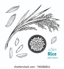 Detailed hand drawn vector black and white illustration of rice seeds and straw