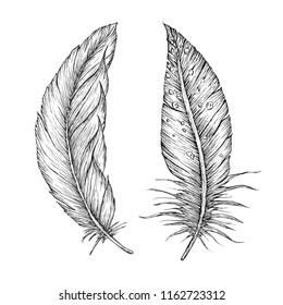 Detailed hand drawn vector feathers. Ornate outline card.