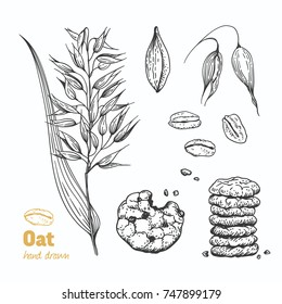 Detailed hand drawn vector ink black and white illustration of oat plant, flakes, seeds and straw.