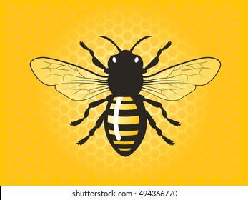 Detailed honey bee vector illustration.