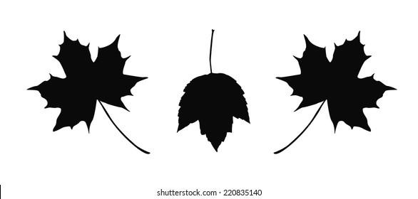 maple leaf outline images  stock photos  u0026 vectors