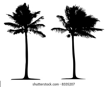 Detailed palm tree isolated on white background